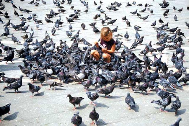 Мэр Магадана ввел штрафы за кормление голубей