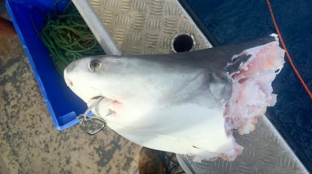 Жестокий мир акул (4 фото + видео)