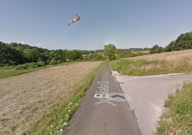 В Польше машина Google maps сбила кролика (3 фото + видео)