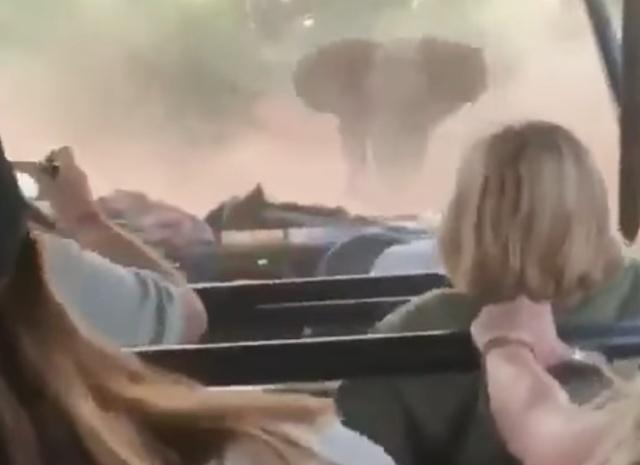 Слон напугал туристов