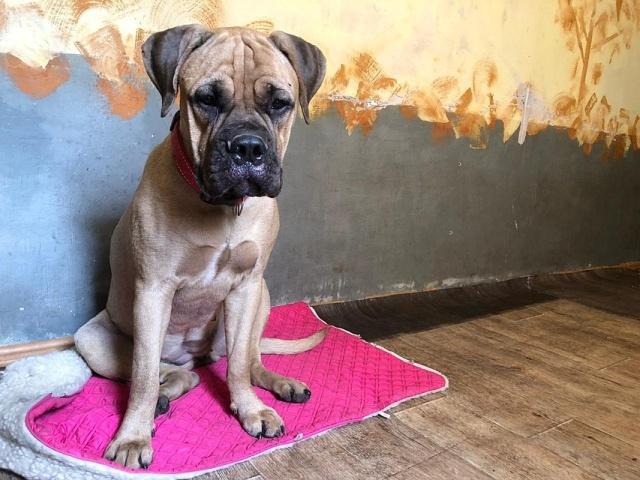 Собака двое суток бежала в Красноярск к людям, которые ее бросили (3 фото)