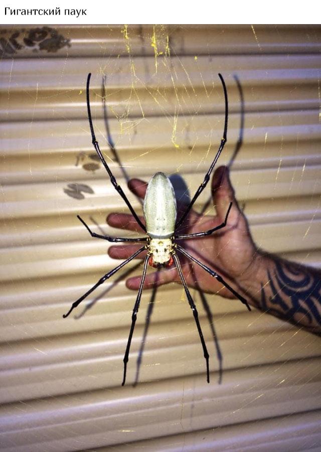 В Австралию ни ногой (20 фото)