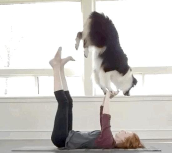 Ловкие собаки (20 гифок)