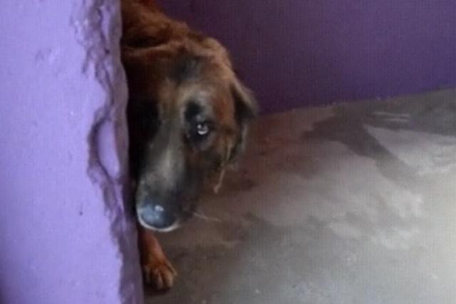 Первый контакт с псом, которого волонтеры забрали у хозяина