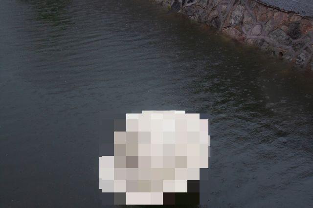 """В Благовещенске из озера достали весьма необычный """"улов"""" (фото + видео)"""
