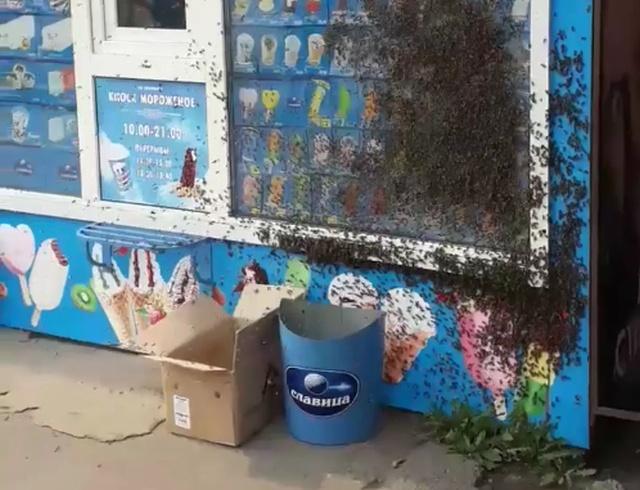 Пчелы любят мороженое