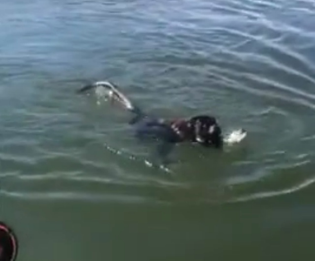 Ой, собака в беде, нужно срочно спасать!