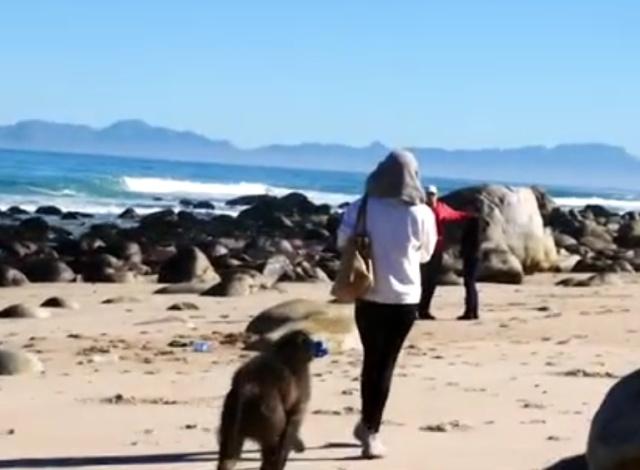 Необычный воришка на пляже в ЮАР