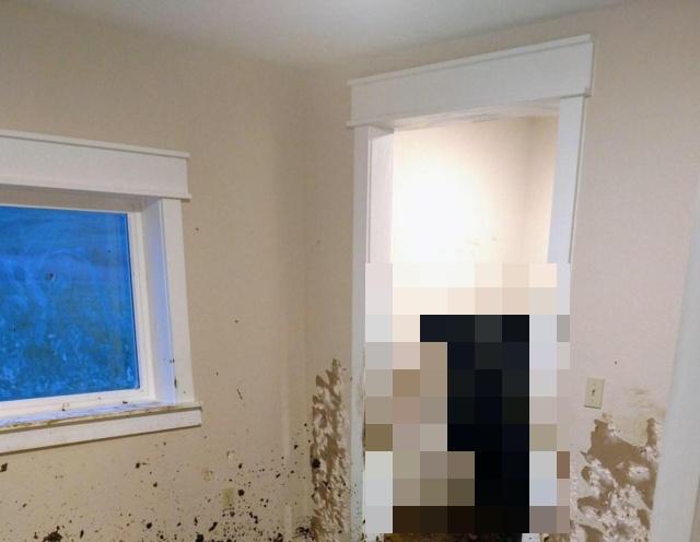 Незваные гости в новом доме (2 фото)
