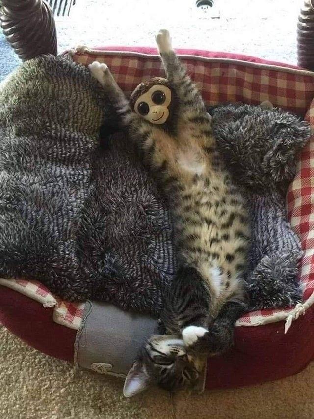 Кот и игрушечная обезьянка запустили новый масштабный фотошоп-батл в соцсетях (12 фото)