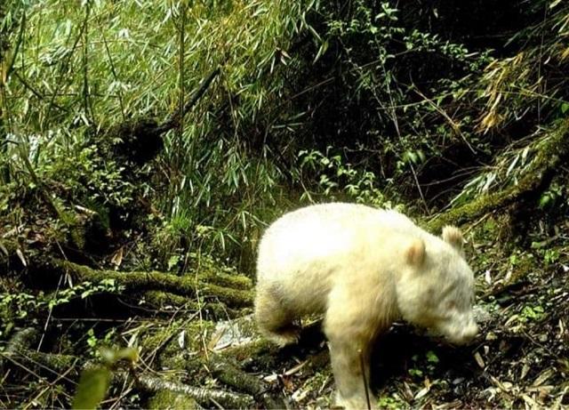 Белоснежная красота: подборка удивительных животных-альбиносов (16 фото)