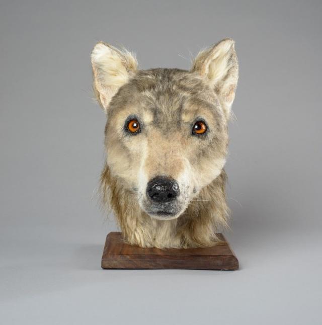 Как выглядела собака 4000 лет назад (4 фото)