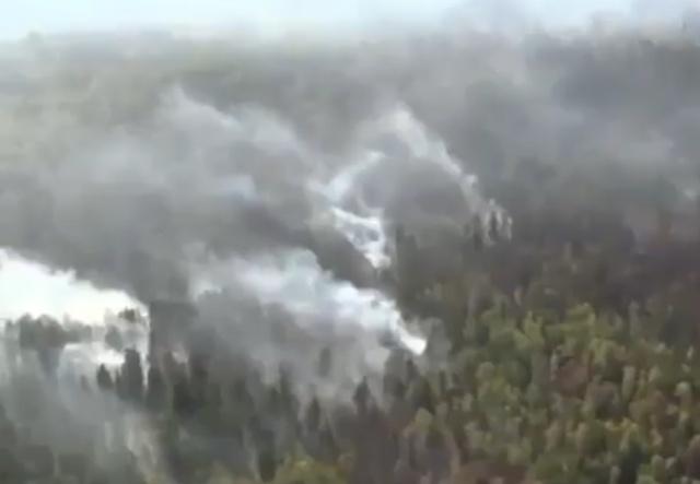 Леонардо Ди Каприо призвал общественность не игнорировать лесные пожары