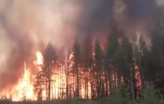 Лесной пожар в Сибири. Видео из Якутии