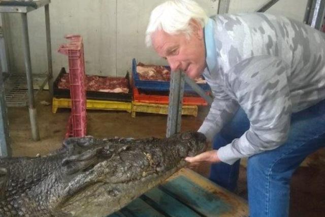 Странная находка в желудке крокодила (3 фото)
