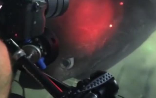 Неожиданная встреча в глубинах океана