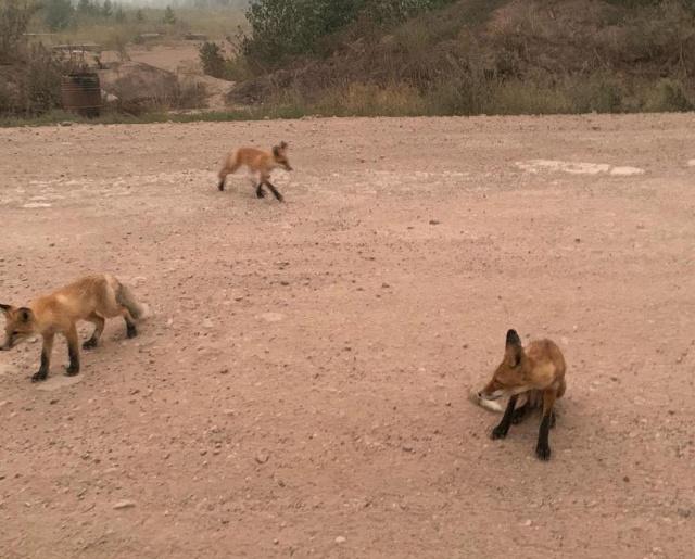 В Иркутской области животные бегут из леса из-за пожара