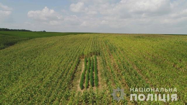 Странные насаждения в поле на Буковине (4 фото + видео)