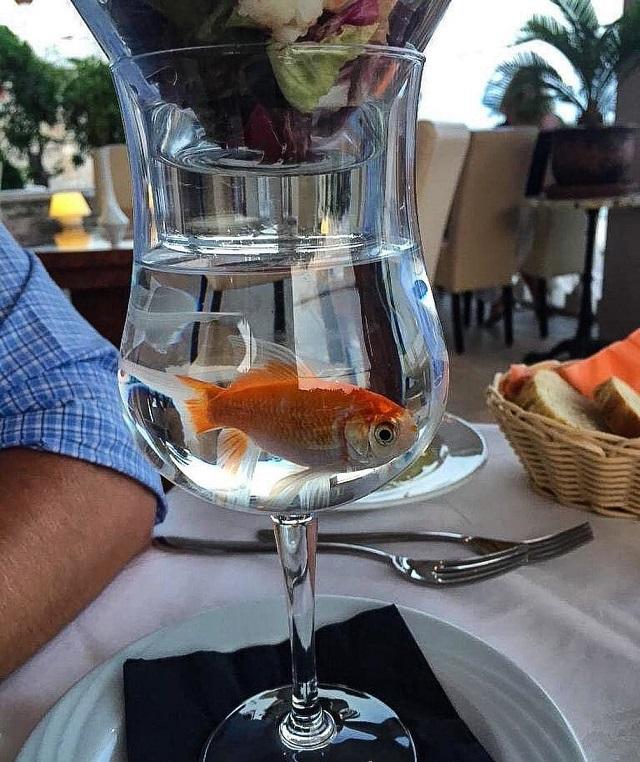 Экстравагантная и эффектная подача блюд в ресторанах (20 фото)