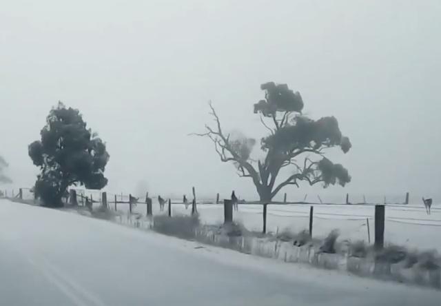Необычное зрелище из Австралии: кенгуру на снегу
