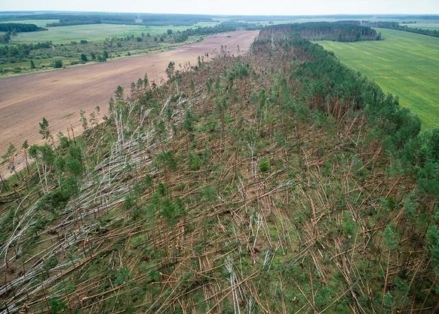 """В Белоруссии ветер """"положил"""" деревья на площади в 90 гектаров"""