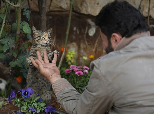 Сириец отказался от эвакуации, чтобы спасти брошенных кошек (18 фото)