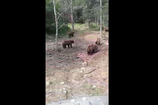 """""""Медвежий патруль"""" окружил машину с людьми в Якутии"""