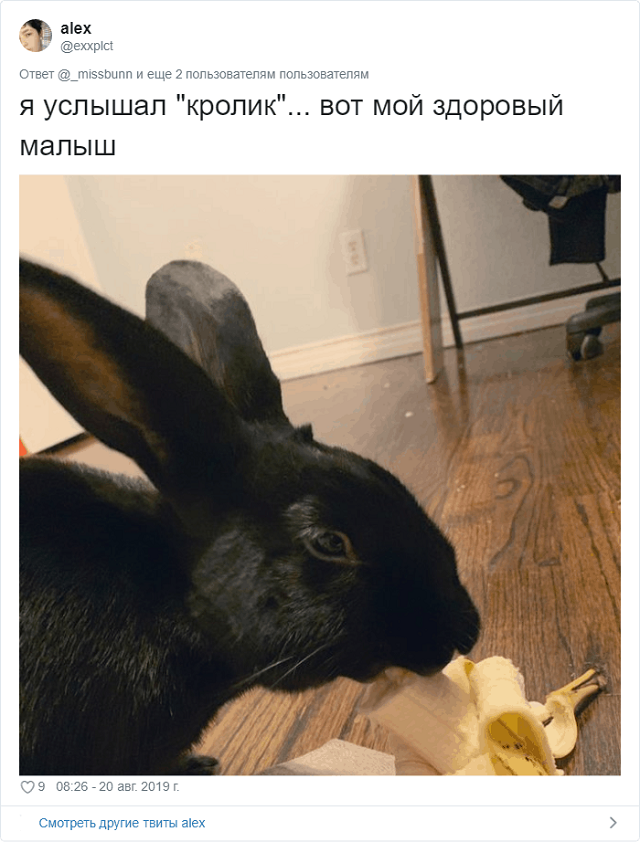 Новый спор в Сети: кролик или ворона? (9 фото + видео)