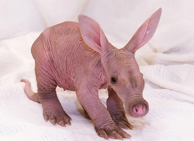 Детеныши животных, которых мало кто видел даже по телевизору (24 фото)