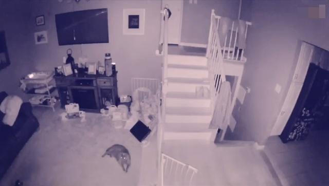 Камеры засняли летающий полупрозрачный силуэт, напоминающий ребенка