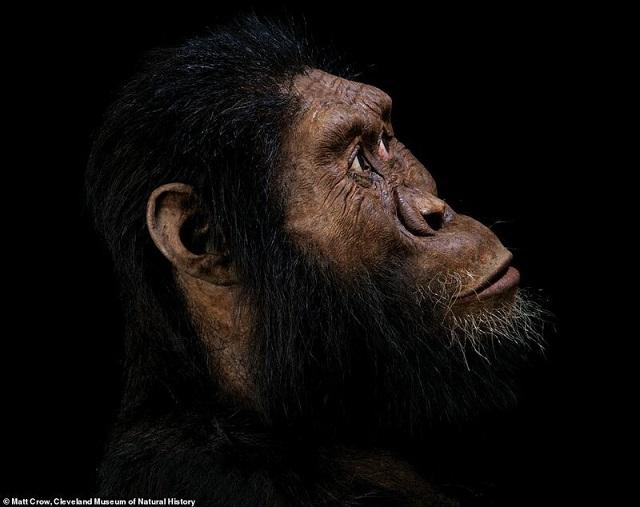 Ученым удалось воссоздать портрет предка человека, жившего более 4 млн лет назад (8 фото)