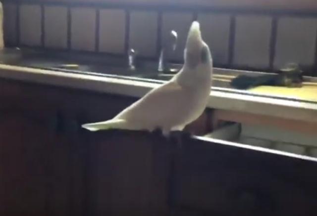 Дорогая, на ужин будет суп из птицы!