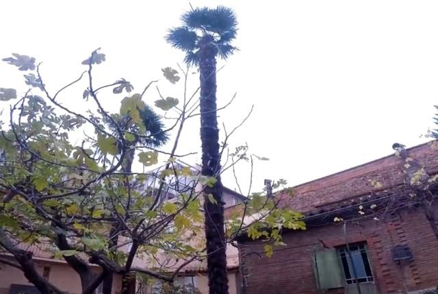 Спилить пальму бензопилой? Не самая хорошая идея