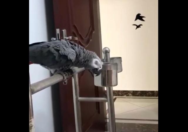 Как объяснить попугаю, что нельзя кусать хозяина?