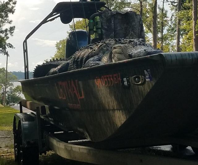В Джорджии охотники поймали огромного аллигатора-динозавра (9 фото)