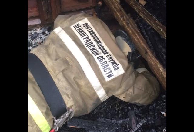 Пожарные спасли котенка из-под обломков сгоревшей школы в Ленобласти