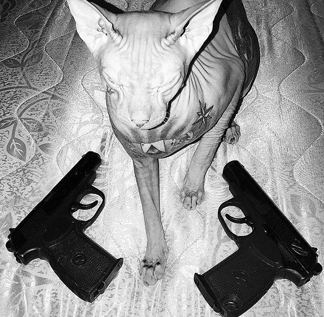 Внимание: потерялся кот-сфинкс по кличке Бес (10 фото)