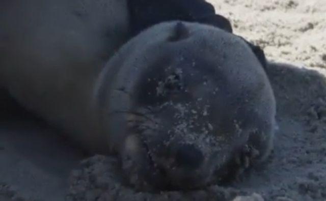 Парни поймали и спасли несчастного морского котика