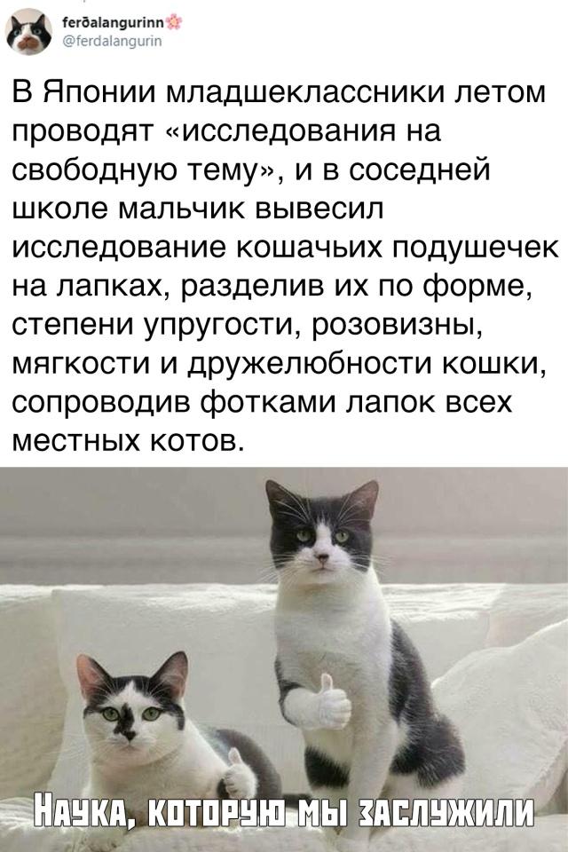 1568905346_podb_vecher_16.jpg