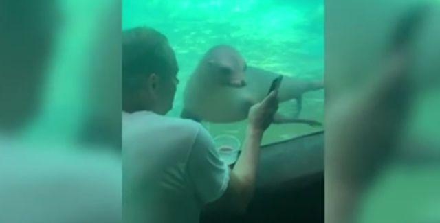 Мужчина успокоил морского льва картинками с телефона