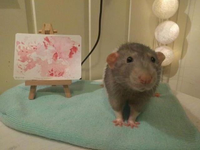 Дарий - крысенок, который стал успешным художником (8 фото)