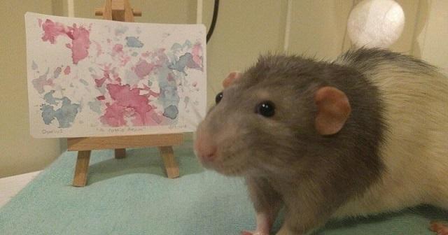 Darius - patkány, aki sikeres művész lett (8 fénykép)
