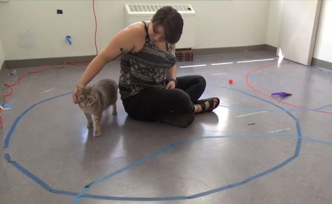 Ученые выяснили, как кошки относятся к людям (8 фото)