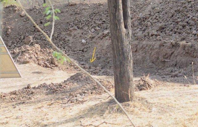 Проверка наблюдательности: найдите леопарда на фото (2 фото)