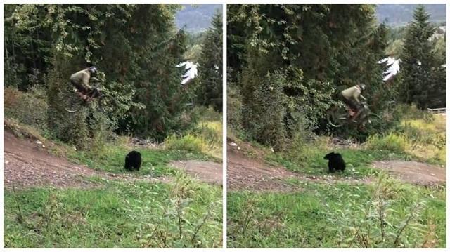 Новый экстремальный трюк - прыжок через медведя