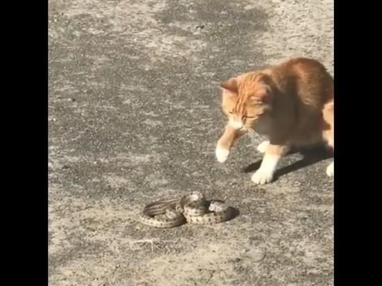 Битву кота и змеи в Волгограде сняли на видео