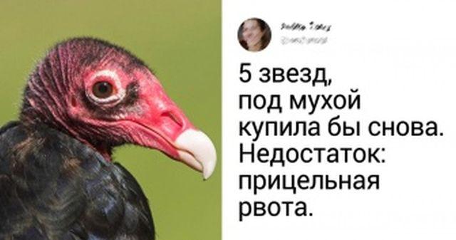 Сотрудники зоопарков описывают своих животных так, будто они купили гаджет в интернет-магазине (15 фото)