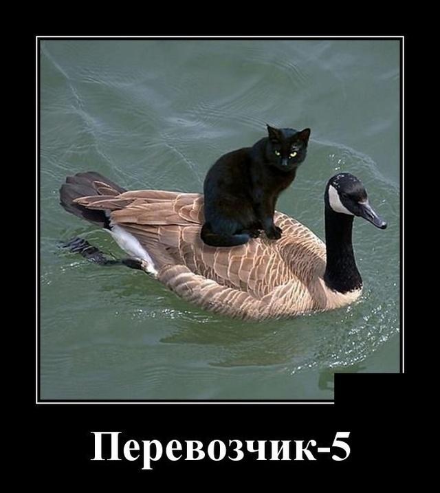 1570108994_demotivatory_10.jpg
