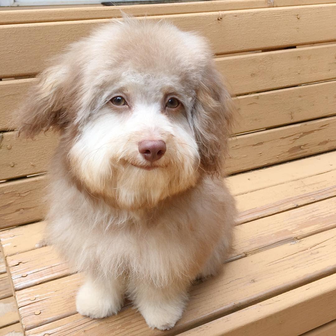 Нори - пес с абсолютно человеческой мордой (25 фото)