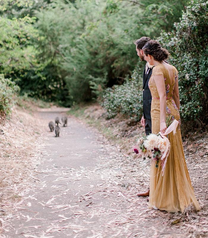 Банда енотов ворвалась на свадебную фотосессию и сделала ее лучше (7 фото)